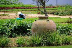 Expat Diary: Vietnam  Gardening at The Nam Hai  Hoi An  Photo: Jeanne Henriques