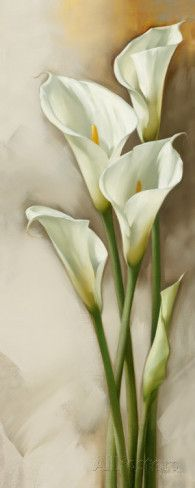 Few fresh cut flowers offer the elegance and versatility of the calla lily. If you are designing your own wedding bouquet, centerpieces or arrangements, the calla lily will provide all of the style… Lys Calla, Calla Lillies, Calla Lily, Art Floral, Flower Prints, Flower Art, Watercolor Flowers, Watercolor Paintings, Acrylic Flowers