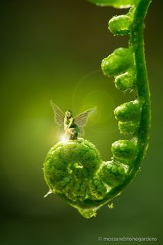 """ensphere: (via fairies) """"Everything you can imagine is real.""""    ~Pablo Picasso"""