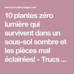 10 plantes zéro lumière qui survivent dans un sous-sol sombre et les pièces mal éclairées! - Trucs et Bricolages