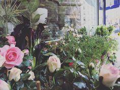 Quelques Photos, Boutique, Plants, Flowers, Plant, Boutiques, Planets