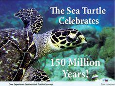 sea-turtle-title.jpg