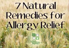 Allergy Remedies 7 Natural Remedies for Allergy Relief herbsandoilshub. If you suffer from seasonal allergies, this post by Katie may really help you. Natural Asthma Remedies, Natural Remedies For Allergies, Ayurvedic Remedies, Allergy Remedies, Cough Remedies, Holistic Remedies, Allergy Symptoms, Health Remedies, Asthma Symptoms