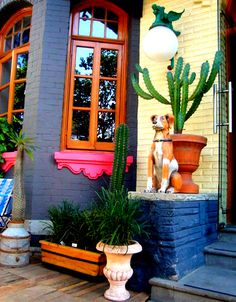 Colonia Roma in Mexico D.F...Inspiration for a patio detail on fantastic windows.Even that giant ceramic.dog is.cool:-)