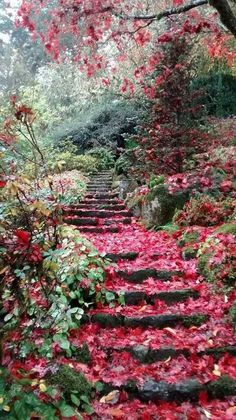 Gorgeous winding steps- our dream garden!