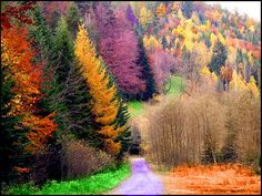 the colours of autumn