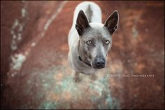contemporary, lifestyle, on-location pet photography, capturing the spirit of your pet, award winning, best, photographer