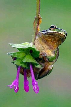 LOVE THIS CUTE NATURE PICTURE♥