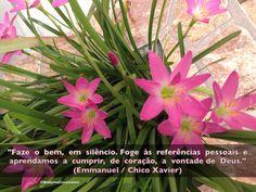 """""""Faze o bem, em silêncio. Foge às referências pessoais e aprendamos a cumprir, de coração, a vontade de Deus."""" (Emmanuel / Chico Xavier)  Do Livro: Vinha de Luz"""
