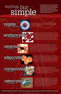 Human Cells - Anything But Simple Chart Medical Careers, Medical Science, Icu Nursing, Nursing Schools, Cells And Tissues, Homeschool Math, Medical Information, Anatomy And Physiology, Neurons