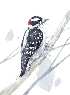 Hey, I found this really awesome Etsy listing at https://www.etsy.com/listing/237023013/downy-woodpecker-watercolor-print