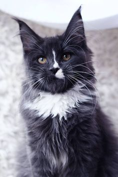 Male Well Being Imhotep a 09 Born 19/04/17 HCM N/N