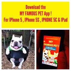 PET LOVERS !  Get This APP ! MY FAMOUS PET for Iphone5 Iphone5s Iphone5c & Ipad on the appstore pet pets rescue dog cat cats dogs animal shelter be kind to animals zoo kitty hellokitty adoptapet adopt a dog cat humanesociety humane society peta Rottweiler German Shepherd Poodle Shorthair Siamese Lab Labrador Pug bulldog cute funny dogpark husky beagle bichon dachshund boxer hound longhair terrier sandiego columbus cincinnati meow phoenix zoo San Diego Chicago Bronx pig bird parrot breed bree...