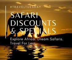With these crazy discounts, special offers and free stuff, there's no better time than NOW to book your African Safari. Travel Deals, Budget Travel, African Safari, Africa Travel, Free Stuff, Things To Come, Tours, Explore, Book