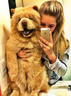 Omggggg that dog looks like a big teddy bear! If i had that dog i would never stop hugging it!