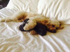 Zamiin huging his pillow...