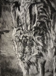 Rabbit Study 5   Charcoal, Ink, and Graphite on Rives BFK paper.  Drawing by Alexander Landerman