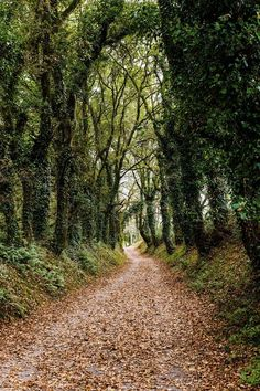 Camino de Santiago // Way of St James (pilgrim trail in Spain) by Ramon Bacas cr. Beautiful World, Beautiful Places, Landscape Photography, Nature Photography, West Coast Trail, Forest Path, Colorado Hiking, Ice Climbing, Take Better Photos