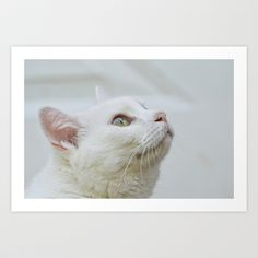 Photography White Cat kitten watching the clouds Art Print by Robin Seeber's Candid Pixels photography - $22.88
