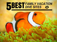 5 best dive sites for #family #divers