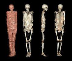 Momia egipcia  Reconstrucción tridimensional de la tercera momia.