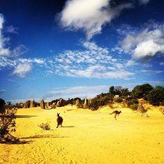 The Pinnacles #Australia Photo by seeaustralia