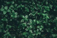 Aesthetic Desktop Backgrounds Wallpaper Pc Aesthetic Hd - allwallpaper Green Leaf Wallpaper, Plant Wallpaper, Wallpaper Pc, Wallpaper Pictures, Minimal Wallpaper, Wallpaper Ideas, Beautiful Flowers Pictures, Flower Pictures, Green Leaves