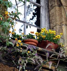 potted plants on the window ledge - love