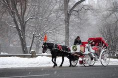 Carriage Ride in Central Park from Official Central Park Carriages LTD™ 2020 - New York City New York City Tours, New York City Travel, Horse Carriage Rides, Tavern On The Green, Museum Tickets, Mountain Bike Tour, Park In New York, Sailing Trips, Honeymoon Places