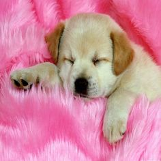 """Dog puppy sleep nap sweet dreams pet pup funny 2 side pillow cushion cover 18"""" #Handmade"""