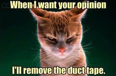 When I want your opinion…