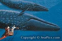 picture of Wyland Whaling Wall