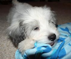 Einstein the Mixed Breed | Puppies | Daily Puppy