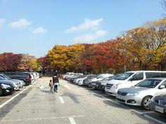 오래간만에 나들이. 서울대공원에 동물원 보러... 조금 춥네요.