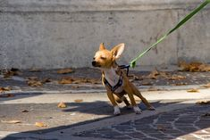 How to Improve Your Dog's Leash Skills for Life