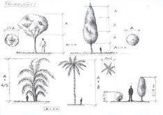 Mariana Castro Interiores: Aprendendo a desenhar paisagismo e vegetação
