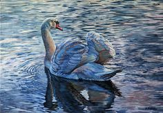 Swan - oil on canvas 46,5 x 65,5
