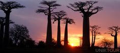 MADAGASCAR :  Autant dans ses paysages que sa culture, celle qu'on appelle la Grande Île a tout à offrir à ses visiteurs. Avec un peuple encore très proche de sa culture ancestrale, Madagascar baigne dans une atmosphère de tradition et d'authenticité. De par la rusticité des infrastructures touristiques et routières, un voyage sur la Grande Île sera une aventure des plus authentiques!