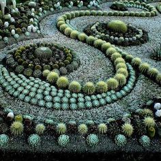 Inspired spirals, something like this for my front yard and driveway except a lot less spiny please!