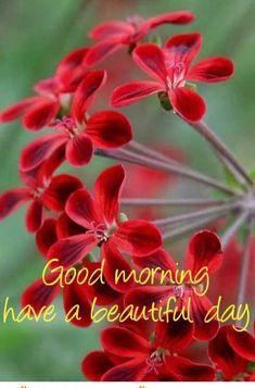Godmorgon Bilder Rörliga