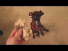 Owner Confronts Puppy About Eating Money And The Result Is Kinda Expected