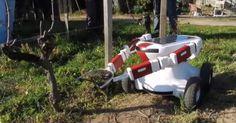 Solar powered farm robot, it prunes grape vines.