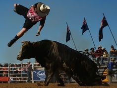 A cowboy is thrown from a bull during the Bull Ride Spectacular on the first day of the 2014 Deni Ute Muster in Deniliquin, Australia.