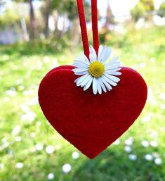 ..Çok uzaklarda bir istanbul masalı.. Papatya ya Aşık ..Yakında olsada eri... - - #Aşık #Bir #Çok #eri #istanbul #masalı #olsada #Papatya #uzaklarda #Yakında