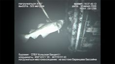 SINGPOST~ QUEST FOR AMUSEMENT: Mermaid Sighting on Animal Planet Documentary - Is it a Scam?