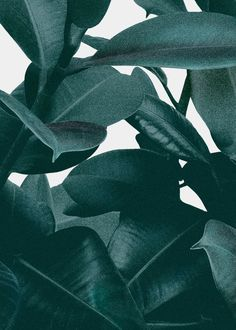 "minimalzine: "" Hanna Kastl-Lungberg shares her collection of foliage… Minimal Wallpaper, Wallpaper Backgrounds, Iphone Wallpaper, Tropical Leaves, Green Plants, Plant Leaves, Backdrops, Gallery Wall, Art Prints"