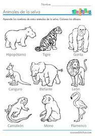Resultado De Imagen De Animales Herbivoros Carnivoros Y Omnivoros Para Colorear Actividades De Los Animales Animales De La Selva Animales Herbivoros