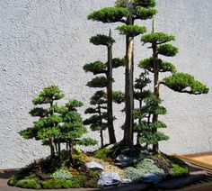 It would be cool to build a train set with real Bonsai trees throughout as if they grew on the landscape naturally.