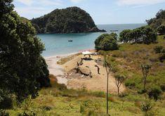 Mangahawea Bay on Moturua Island could be one of New Zealand's earliest settlements Photo/Peter de Graaf Polynesian People, Prehistory, Natural History, Mythology, New Zealand, Island, Water, Scientists, Outdoor