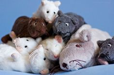rat sleeping in a pile of stuffed rats